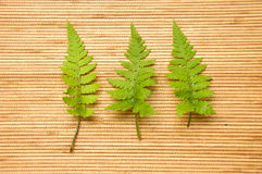 Green fern leaves Stock Photo