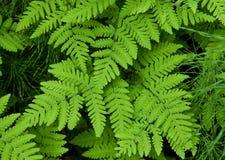 Green fern leaves Stock Photos
