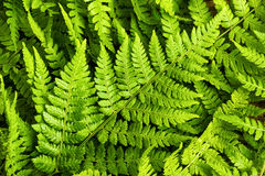 Green fern leaves background Stock Photos