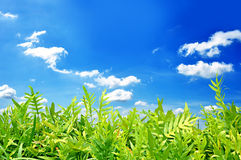 Green fern leaves on blue sky background Stock Photos