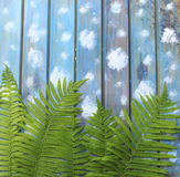 Green fern leaves on a blue wooden background Royalty Free Stock Photography