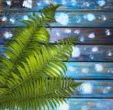 Green fern leaves on a blue wooden table, a picturesque Royalty Free Stock Image