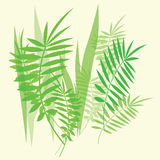 Green fern leaves and branches Stock Photography