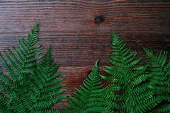 Green fern leaves on brown wooden background. View Royalty Free Stock Photos