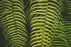 green fern leaves bush texture background stock image