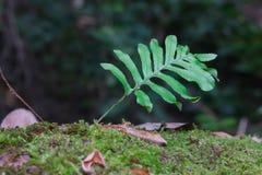 Green fern leaves. Closeup on Thailand Mountain Royalty Free Stock Photos