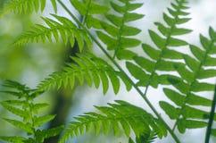 Green fern leaves Stock Photo