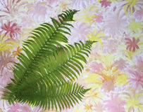 Green fern leaves on a colorful background Royalty Free Stock Photo
