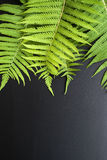 Green fern leaves on a  dark background Stock Photos