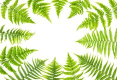 Green fern leaves Floral flat lay Stock Photos