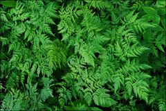 Green fern leaves in the forest beautiful view Stock Photography