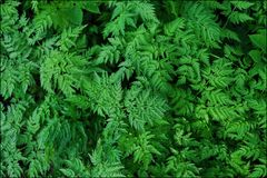 Green fern leaves in the forest beautiful view Royalty Free Stock Photo