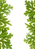 Green fern leaves frame Stock Images