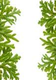 Green fern leaves frame Stock Images