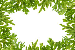 Green fern  leaves frame Royalty Free Stock Photography