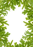 Green fern  leaves frame Royalty Free Stock Image
