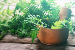 Green fern leaves in mortar Stock Photography