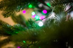 Green Fern Leaves Near Lights Stock Photography