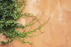 Green fern leaves on old cement wall, Vintage color effect styl. E, orange wall,Old walls of the orange stone stacked beautifully, red brick wall Stock Photography