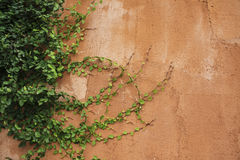 Green fern leaves on old cement wall, Vintage color effect styl. E, orange wall,Old walls of the orange stone stacked beautifully, red brick wall Stock Photos