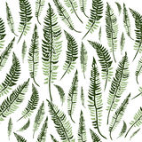 Green fern leaves. Seamless pattern with green fern leaves isolated, botanical vector illustration Stock Photography