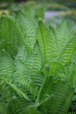 Green fern leaves. Selective soft focuse and boke on background Stock Photo