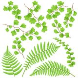 Green Fern Leaves Set. Branches and leaves of tropical plants set. Green fern fronds isolated on white. Vector flat illustration Stock Image
