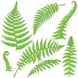 Green Fern Leaves Sketch. Hand drawn branches and leaves of tropical plants. Green fern fronds isolated on white. Vector sketch Royalty Free Stock Photos