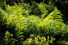 Green fern leaves in sunlight stock photos