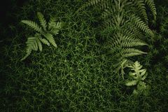 Green fern leaves texture royalty free stock images