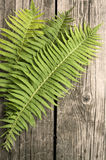 Green fern leaves on  wooden dark background Stock Photo