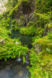 Green fern and little waterfall in takachiho gorge, Miyazaki, Japan stock images