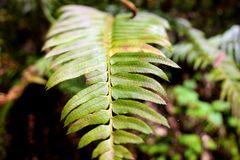 Green fern in the middle of the forest stock photography