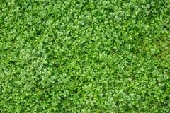 Green fern moss Stock Photography