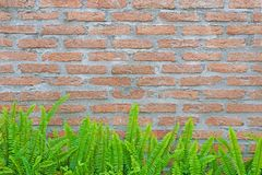 Green fern and moss on brick wall royalty free stock photography