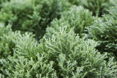 Green fern in nature Stock Photos