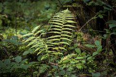 Green fern near a tree Stock Photos