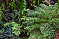 Green fern and other plants. Big green fern on the background of the multi-colored plants. It is the Cloud Forest in Singapore. Closeup. Horizontal Stock Photo