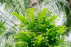 Green fern on palm tree Stock Photo