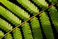 Green Fern Pattern. Diagonal pattern shot of green ferns stock photo
