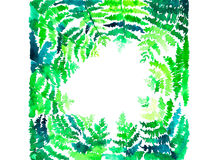 Green fern pattern Royalty Free Stock Photos