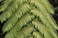 Green fern plant leaf in nature photo Stock Photo