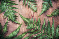 Green fern plant leaves on rustic wooden background Royalty Free Stock Image