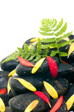 Green fern, red yellow  petals on black zen stone Stock Photo