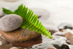 Green fern with rocks in river Stock Image