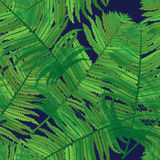 Green fern seamless background. Green fern seamless with blue background Royalty Free Stock Photos