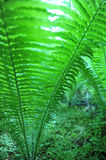 Green Fern Seen From Low Angle. Green fern shot from low angle.  Closeup with soft focus and abstract touch.  Copy space in left side of horizontal image Stock Photos