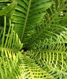 Green fern and soft light Royalty Free Stock Photo