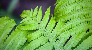 Green fern stems and leaves Stock Photos