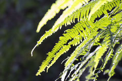 Green fern stock image